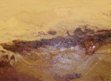 2009-5 BARCELO